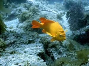 有人告诉我,鱼的记忆只有7秒,7秒之后它就不记得过去的事情