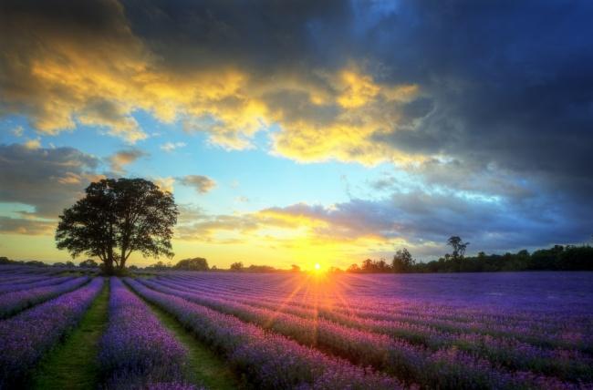 在阳光里渐渐沉默,却再也回不到从前