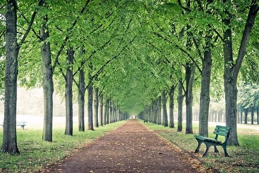 愛人是路,朋友是樹,人生只有一條路