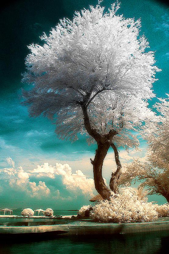 很希望自己是一棵树,守静、向光、安然
