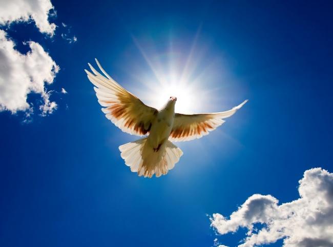 送体验机无需申请2018注册送白菜网站,蓝天白云白鸽翱翔图片