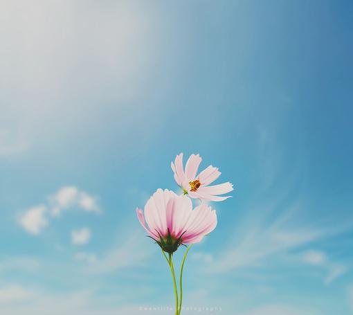 生命里的悲和欢,都是一场坦然面对