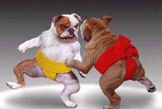 体育界和动物界那些引人爆笑的相似