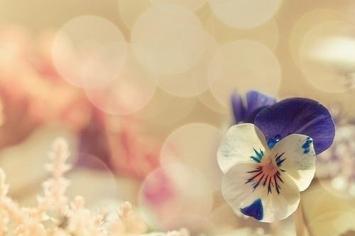 唯有理解和爱,才能打开心结