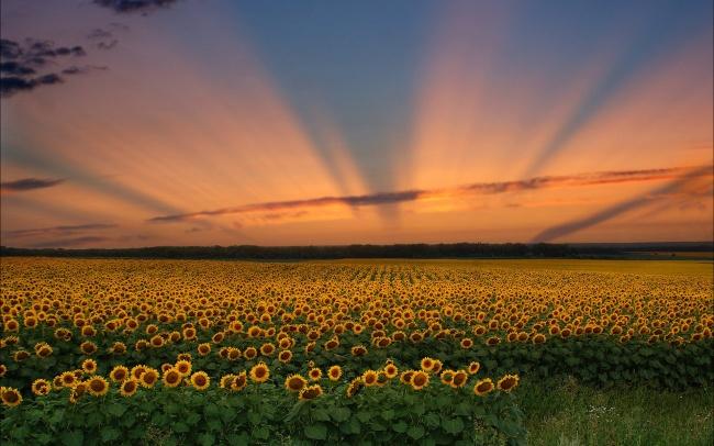 生命的美丽,也许就是源于每一天盼望和遇见