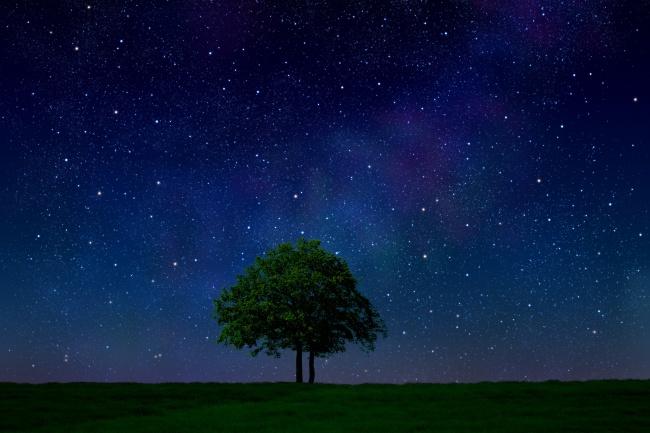 独守心中一片净地,暗夜也为你绽放