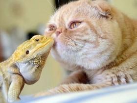 这是动物之间的友情&爱情,动物秀恩爱