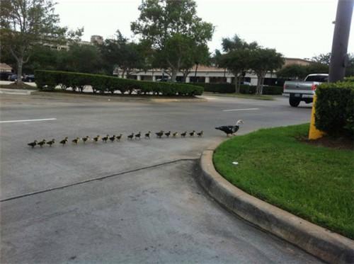 30个动物爸妈和它们的宝宝,动物育儿篇,萌萌哒!
