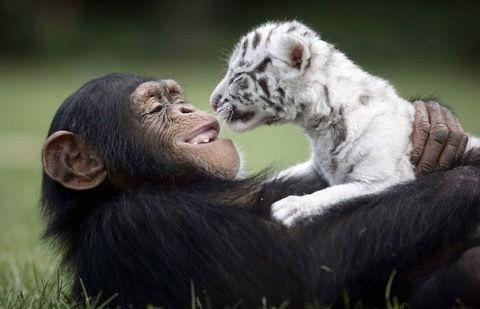 这是动物之间的友情&爱情