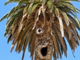 来瞧瞧这些搞怪的树木们,霸气侧漏!