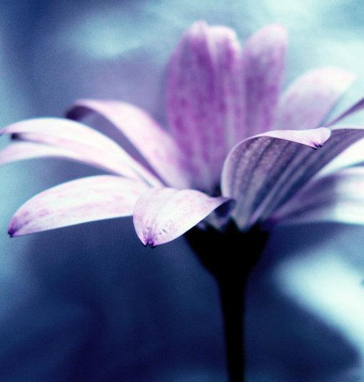 内心强大的人,即使身处世俗逆境,内心也是平和的