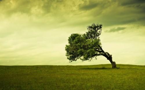 学会微笑,学会坚强,生命就是从一棵落地生根的小树开始