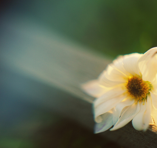 有你的每一天,早已风和日丽