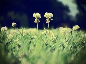 我会在这里等你,一直等你来到我身边