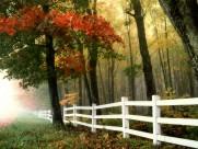 爱在扩散,摇曳,就象树丛里的