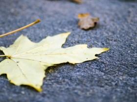 心中有爱,才能够温暖和摆脱尘世间所有的忧伤与苦痛