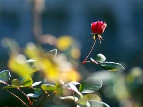 有爱陪伴身边,心中的热度只增不减