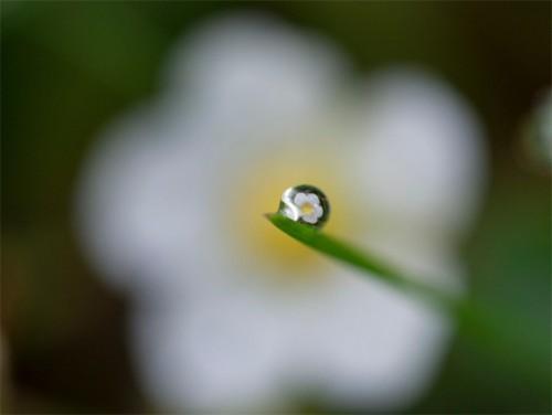 生死虽是必定却有许多美丽的奇观
