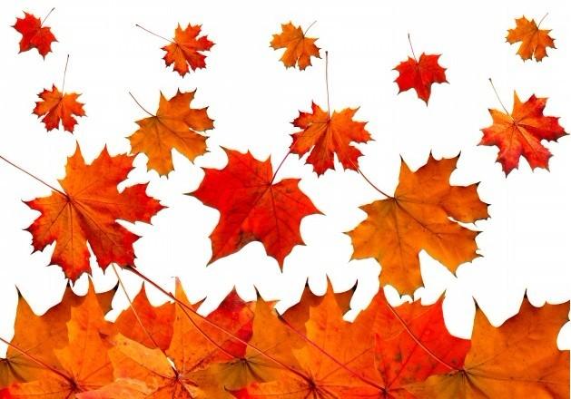 秋季养生的注意事项