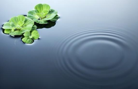 放弃是一种睿智,它可以放飞心灵