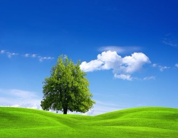 不懂得放弃的人,总将生活中不如意绕在心灵的枝杆上